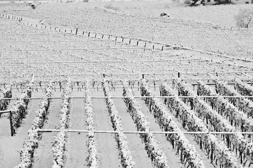 campi-neve1