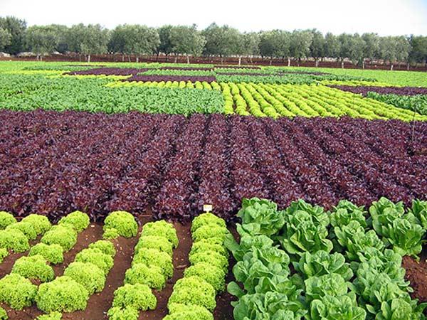 agricoltura-campo-351
