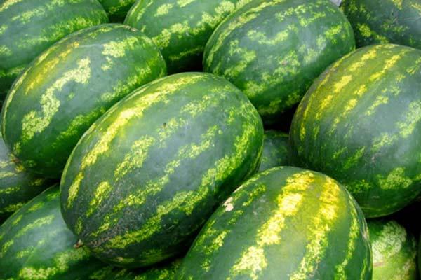 angurie-meloni-765x510