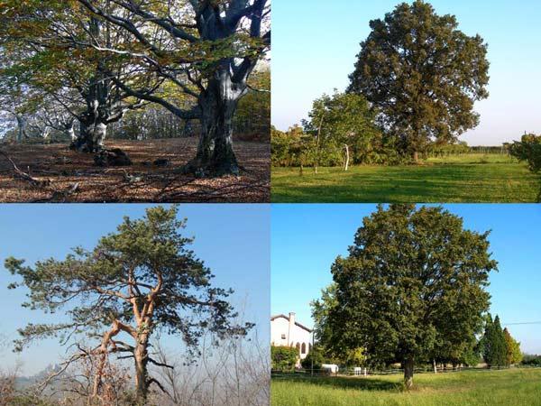 alberi_museo