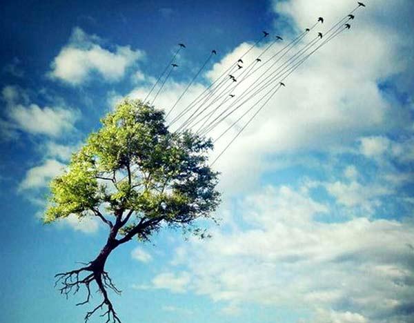 sogno-cielo-radici