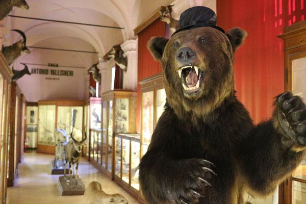 Musei-civici---Carnevale-al-museo