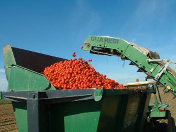 pomodori-industria2-300x225