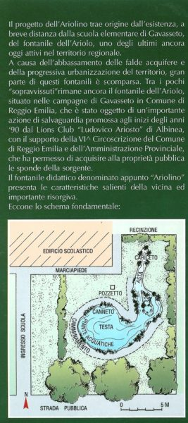 ariolino