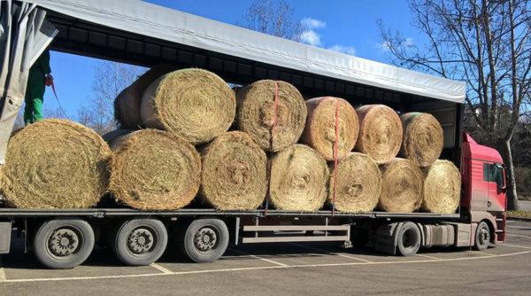 Un'altra fase di carico del fieno destinato alle aziende agricole colpite dal sisma